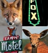 Fox & Fawn Design